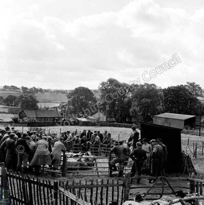 Sheep Sale, Malham